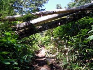 新中ノ湯コース下半分、樹林帯