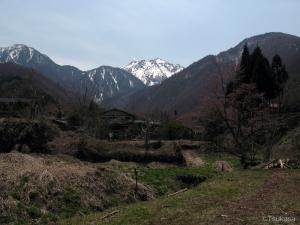 中尾高原から見た焼岳(5月)